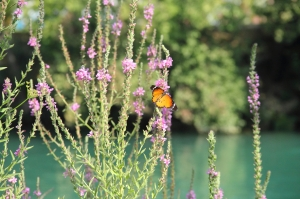 butterflyinmanavgat